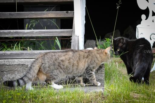 Milou och grannkatten (svart)