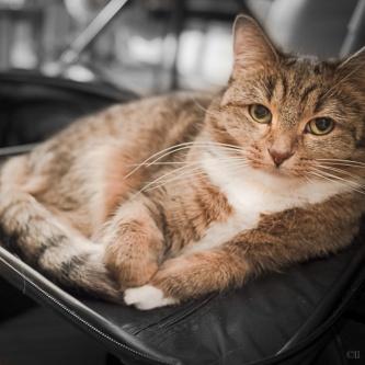 Milou - visst katten vill man resa