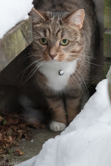 Milou Vittass och snön