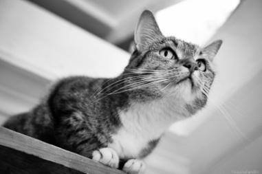 Milou på översta trappsteget