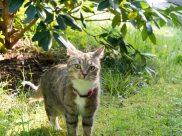 Katten Milou Vittass - så saknad.