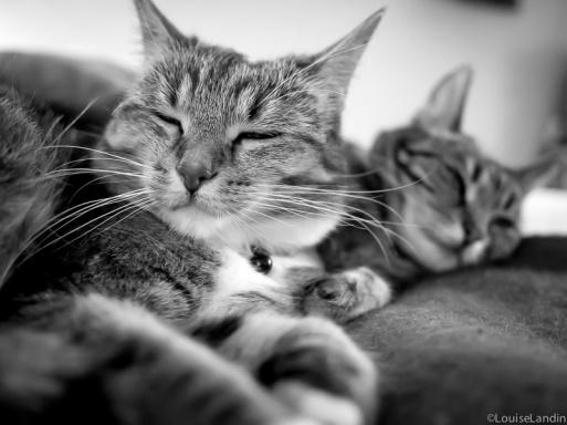 Milou och Tiger, tillsammans