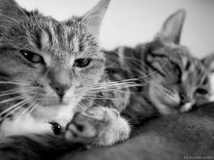 Katterna Milou och Tiger, Tillsammans