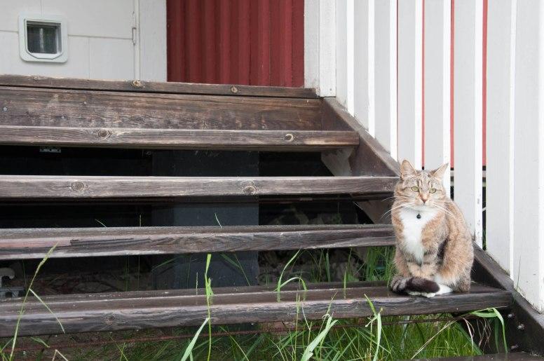 Katten Milou och kattluckan