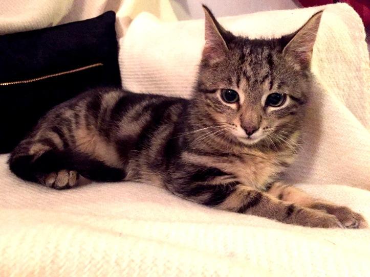 Kattungen Findus. Första kvällen.