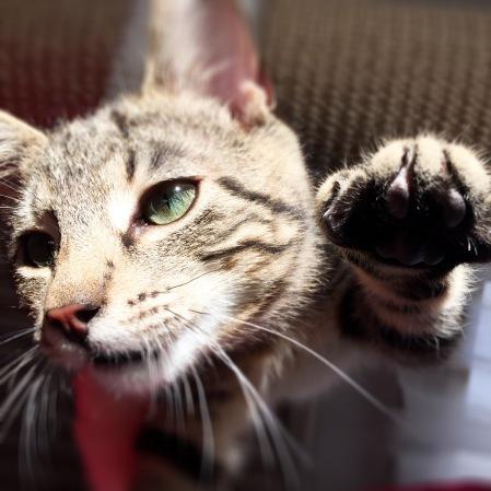 Kattungen Findus - ny i familjen