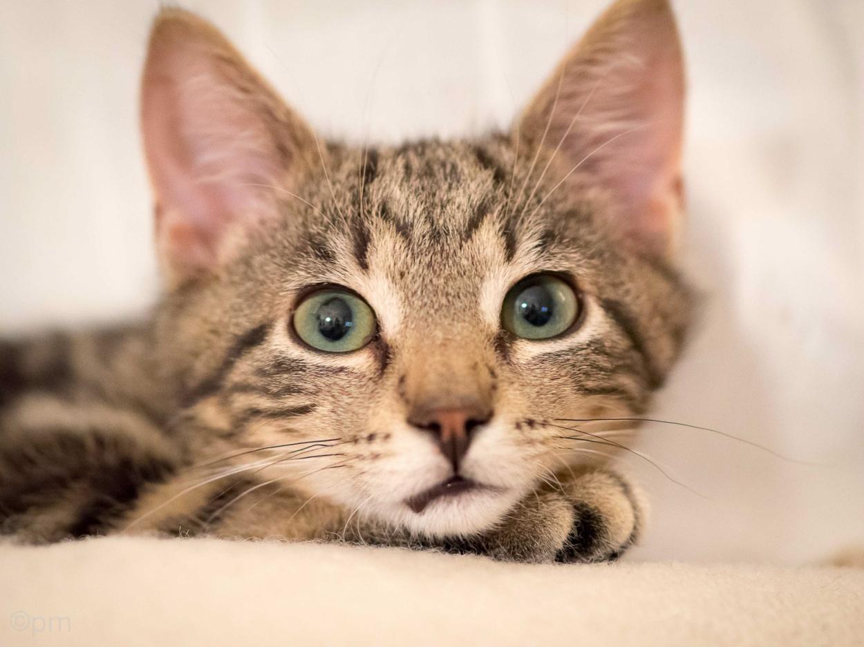 Läs om katten Findus här
