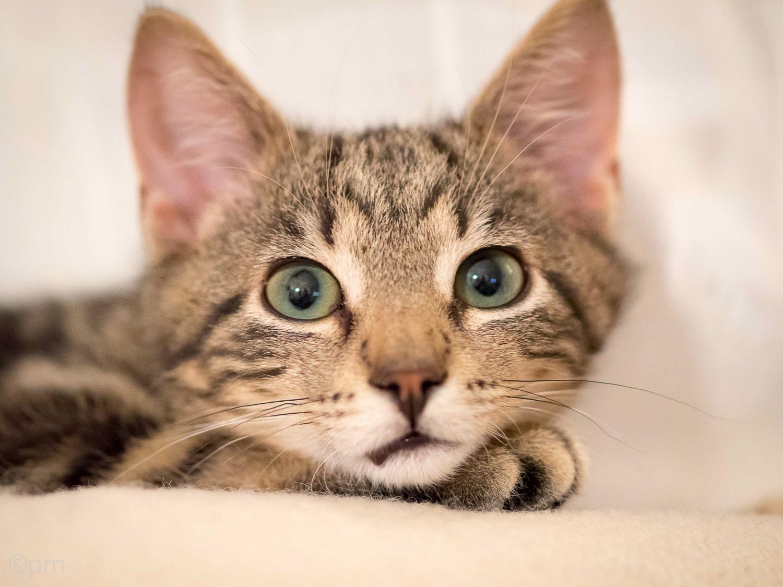 Katten Findus