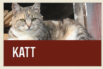 Som katt säger jag: klicka på de andra länkarna, jag ids inte gå nånstans. /Foto: ©Granngården