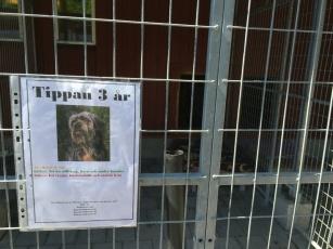 Hundstallet - vi hoppas att Tippan hittar ett fint hem!