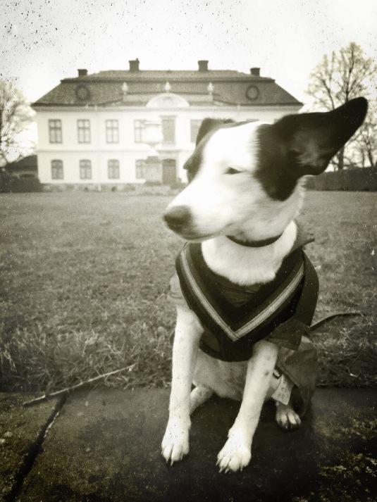 Hundvalp Disa framför slott.