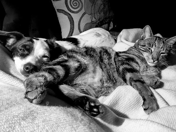 åh vad jag älskar katten Findus...