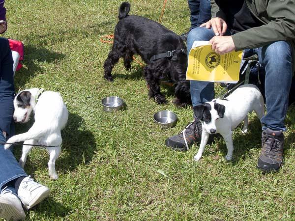 Disa och hundkompisar på utställning hos Svenska Hundklubben i Södertälje.