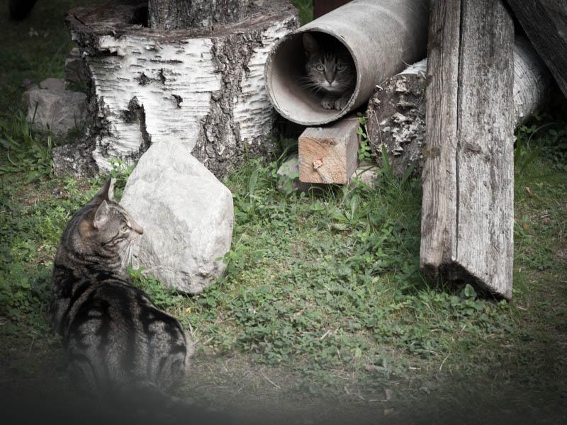 Kurragömma! Tiger i tunneln...