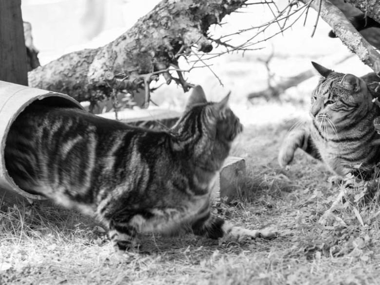 Överraskning är bästa vapnet... Tiger och Findus.