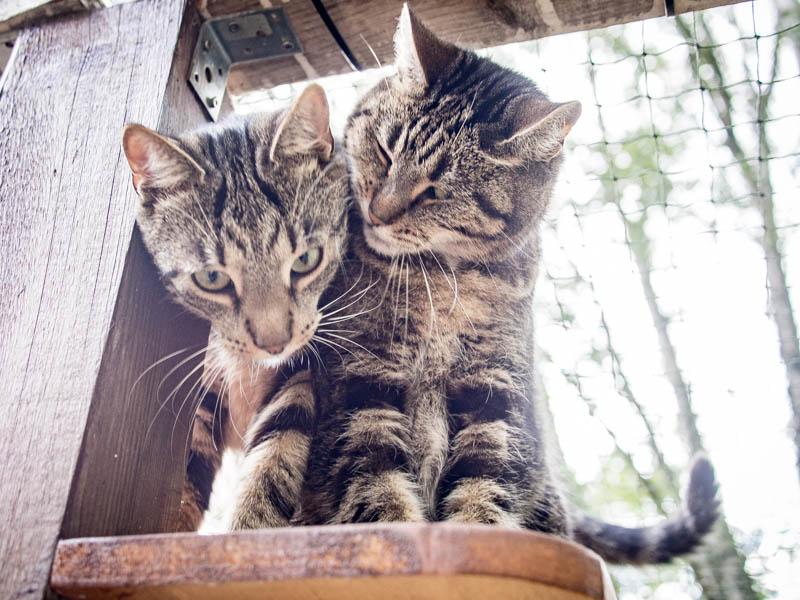 Tiger och Findus