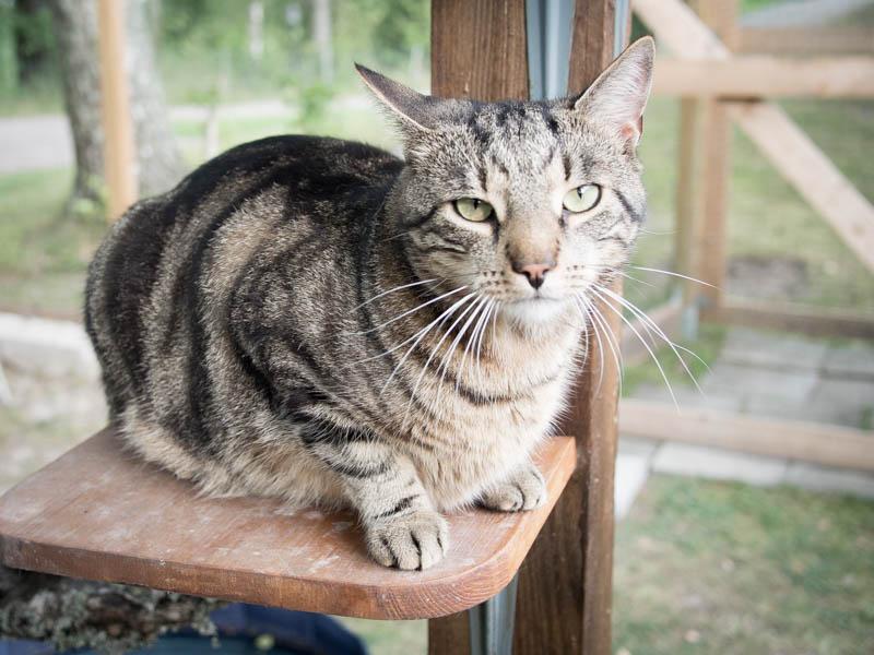 Findus på en av hyllorna i kattgården!