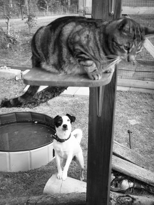 Kom å lek med mig då, Findus! Disa frustrerar för att hon inte kan hoppa lika högt...