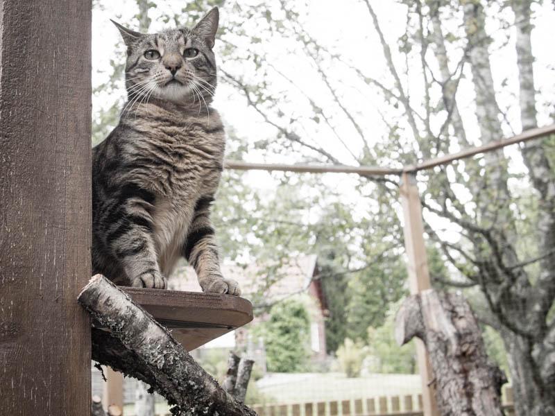 Katterna har i alla fall uppsikt över oss...