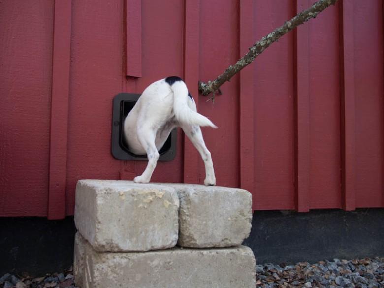 Släpp ut mig ur kattgården!!!