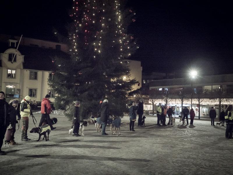 hundar framför julgranen i Södertälje, smällarupproret