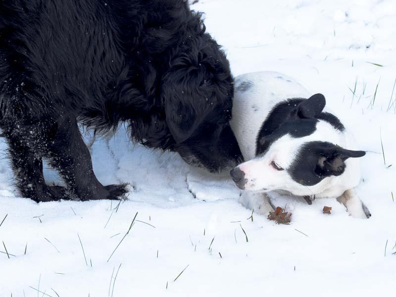 Disa leker med stora hundkompisen Trolle