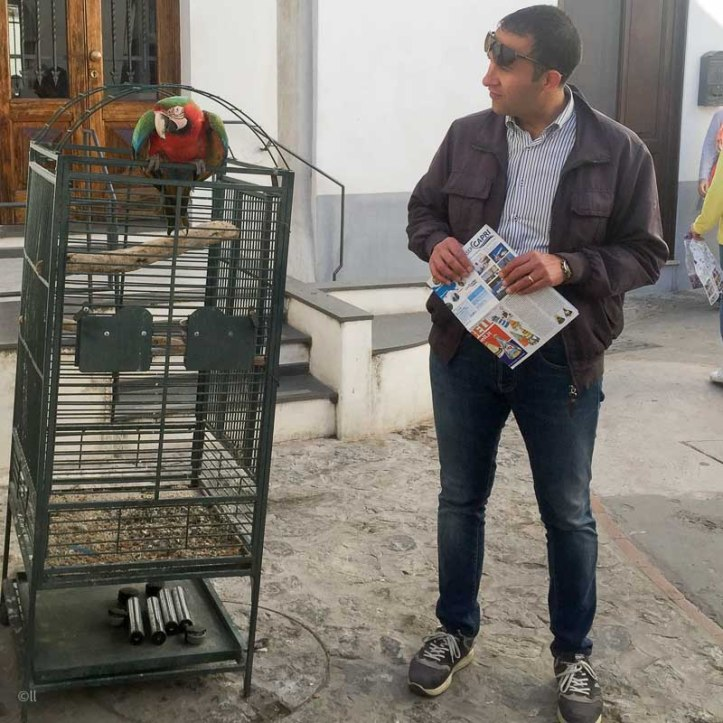 Plötslig papegoja i gränden, Capri.