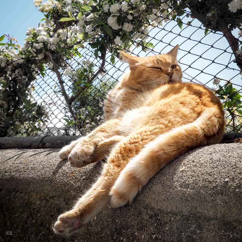 Katt lapar sol.