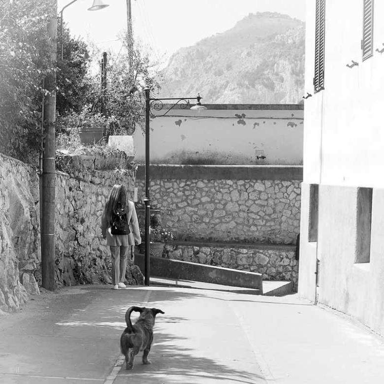Tax på jakt efter mat på Capri.