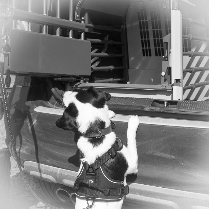 Disa sätter tassarna mot bakluckan, nyfiken på hundburen Variocage