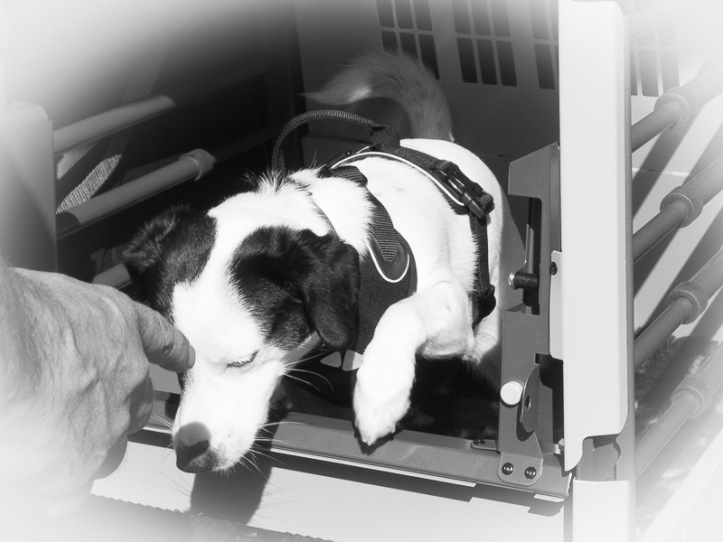 Husse förmanar Disa att stanna kvar i hundburen.