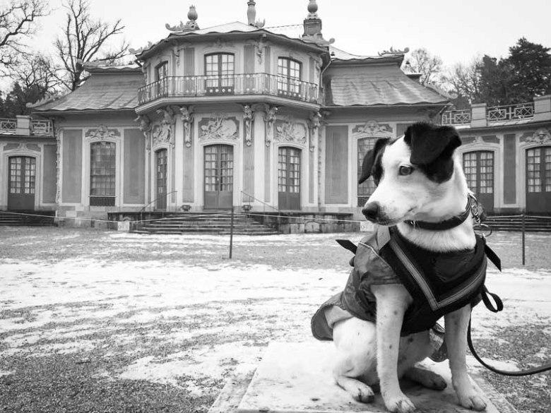 Vår hund Disa poserar framför Kina Slott på Drottningholm.