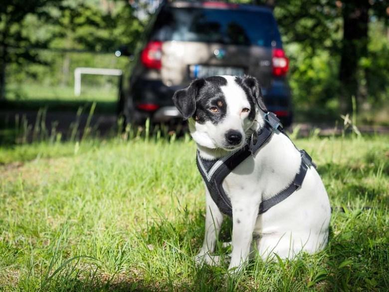 Allsafe säkerhetssele för hund i bil