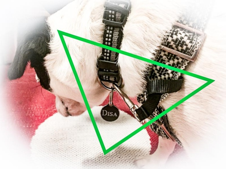 Fäst remmen med en ögla runt selen och klicka fast i halsbandet. Här i finselen från Hundekollektivet.