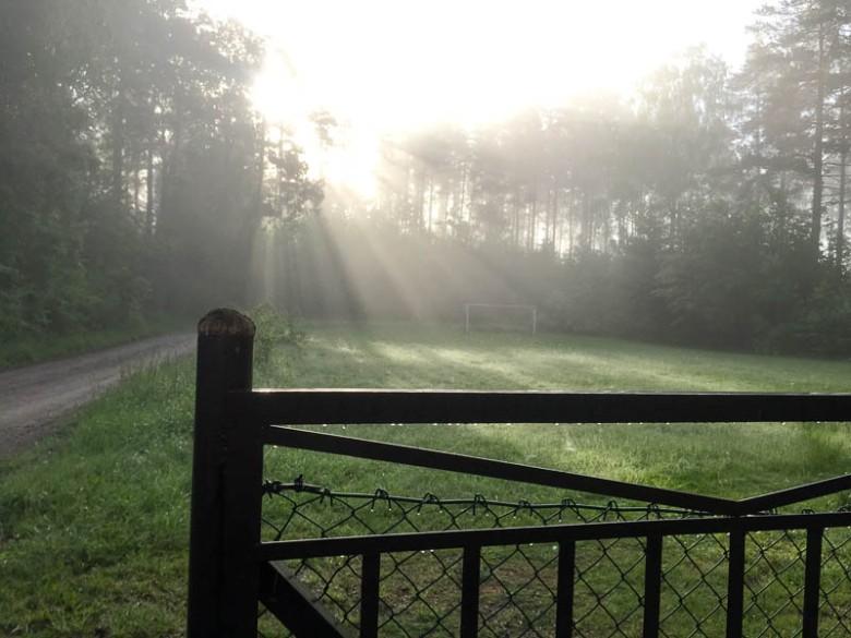 Morgonpromenad i juni