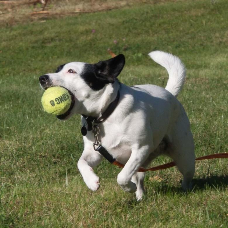 disa-play-ball2