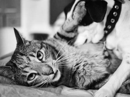 Hunden Disa har katten Findus i ett fast grepp...