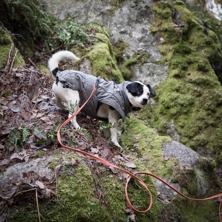 Disa klättrar på klipporna i Furholmens naturreservat